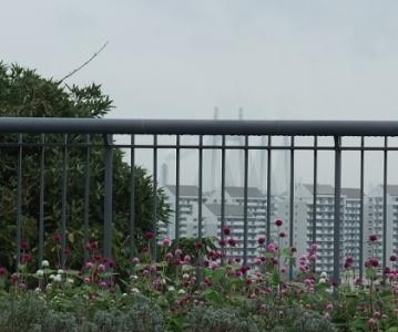 ●千日紅もトウガラシもベイブリッジも