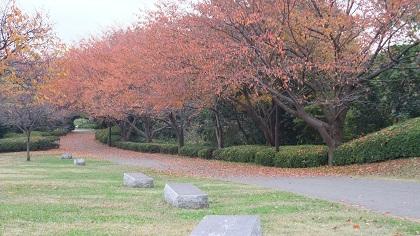 ●桜紅葉もなかなかの風情