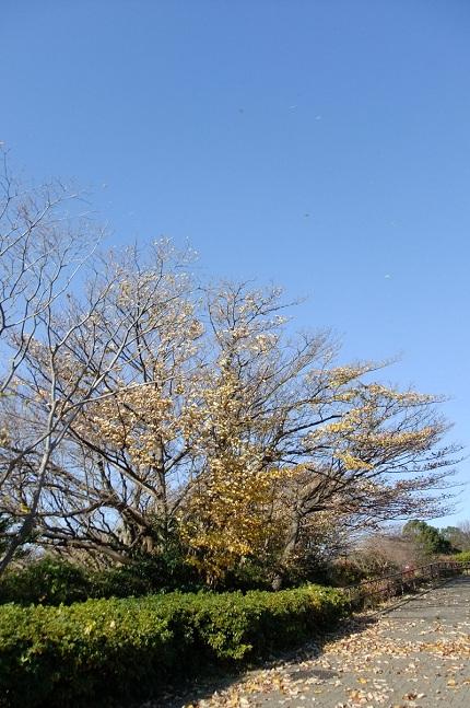 空飛ぶ季節の朝のお散歩